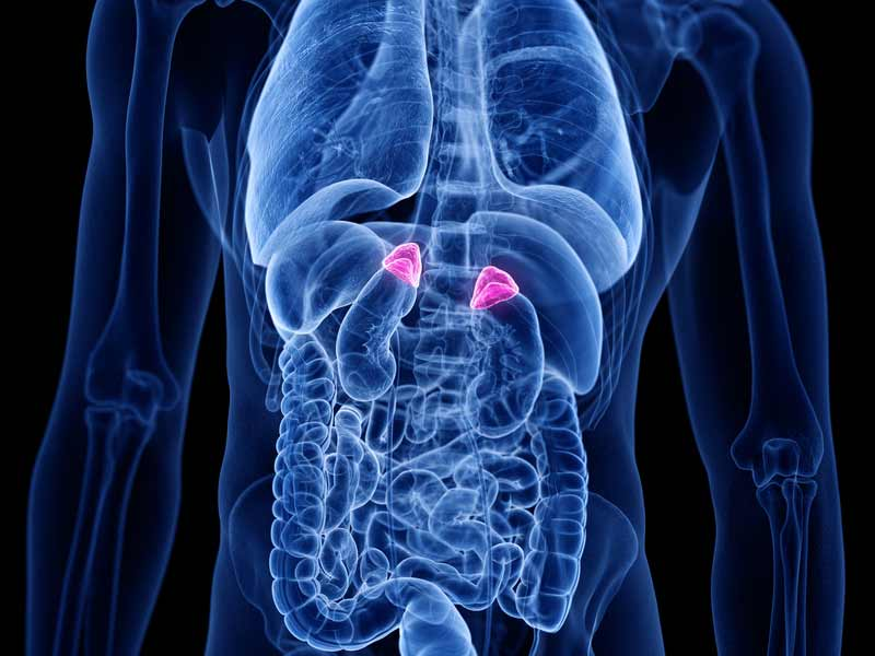 high resolution image of location of adrenal issues