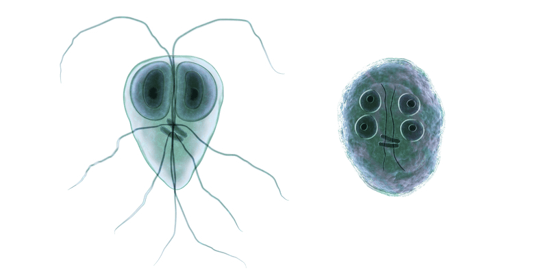close-up of giardia